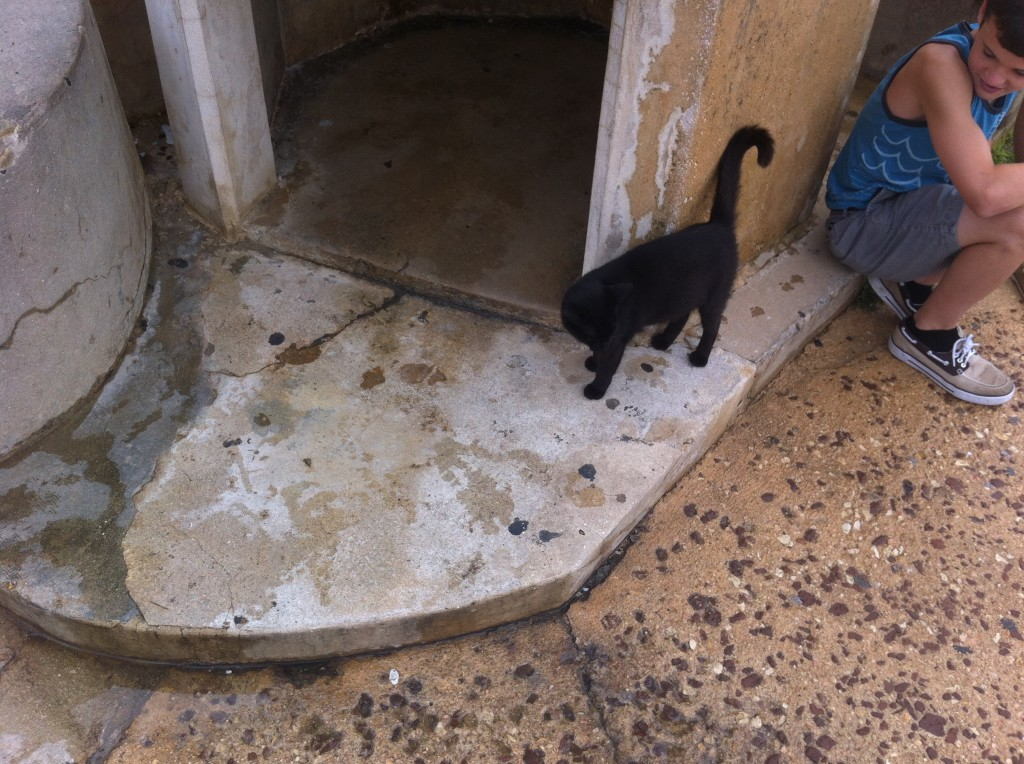 Black cat in Old San Juan